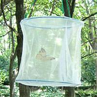 蝶飼育ネット